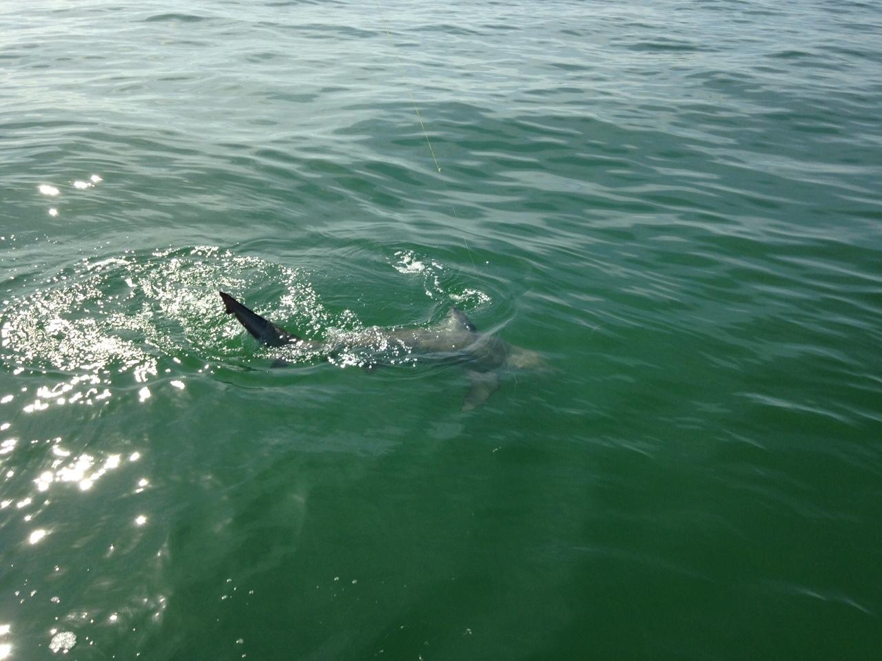 Fishing charters marathon fl keys captain doug kelley for Florida keys fishing charters