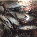 tuna fishing charter florida keys