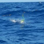Marathon offshore charter fishing